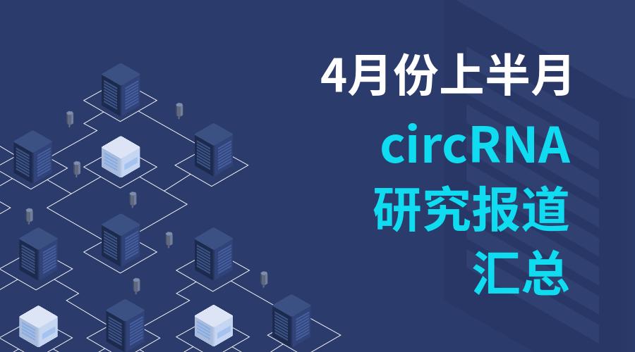 4月份上半月circRNA研究报道汇总