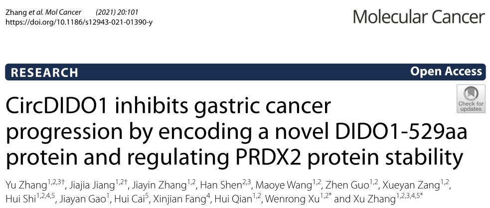Mol Cancer | 新蛋白!CircDIDO1通过翻译和 PRDX2 蛋白抑制胃癌进展