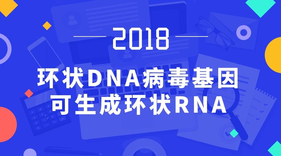 环状DNA病毒基因可生成环状RNA