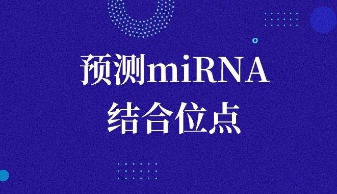 通過circRNA序列預測miRNA結合