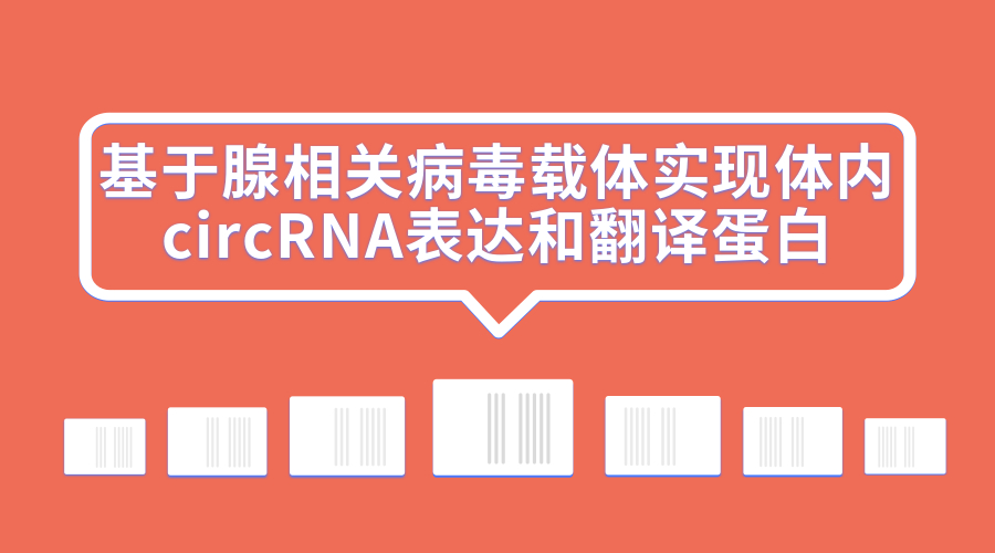 基于腺相关病毒载体实现体内circRNA