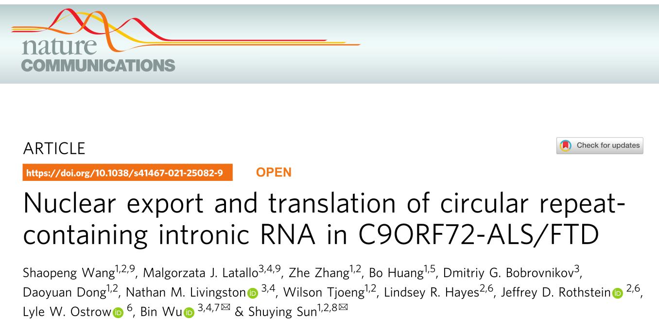 Nat Commun   內含子環狀RNA的核輸出和翻譯
