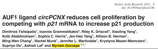 Nucleic Acids Research:AUF1结合circPCNX 调控p21表达