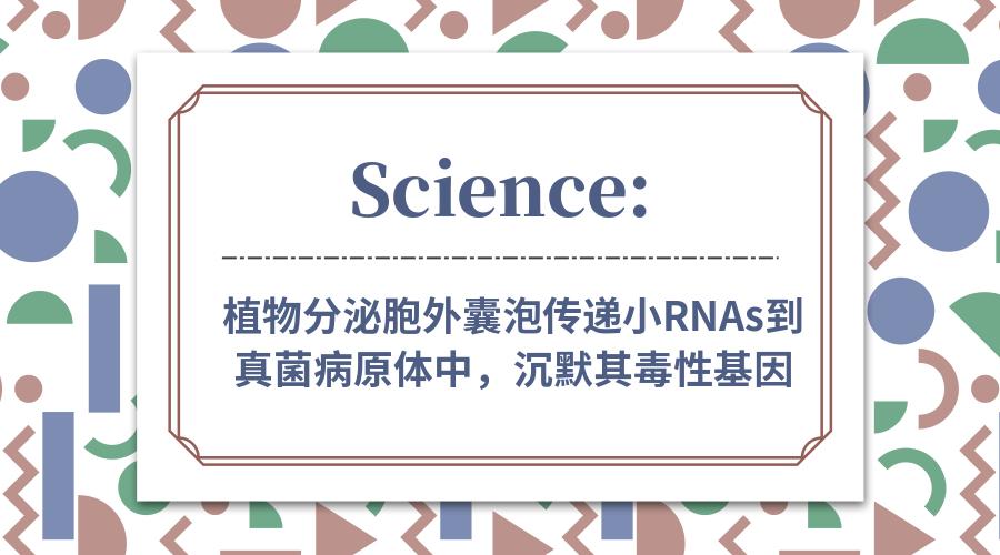 Science: 植物分泌胞外囊泡传递小