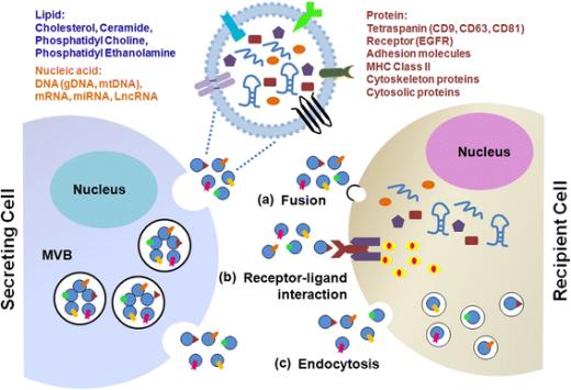 Exosome(外泌体)提取试剂