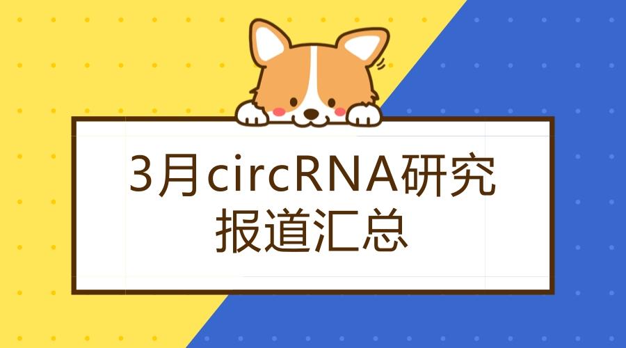 3月上旬circRNA研究报道汇总
