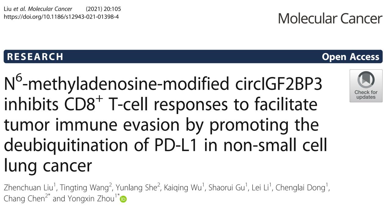Mol Cancer   不止m6A修飾,這篇文章還做了免疫逃逸