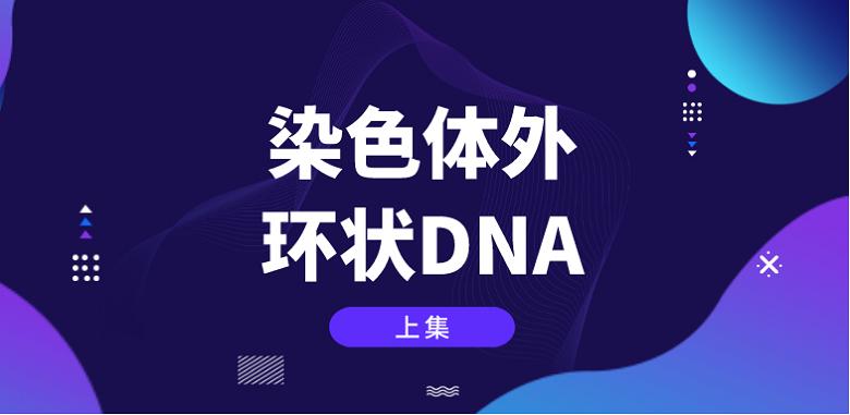 珍藏版【上集】染色體外環狀DNA的研究歷