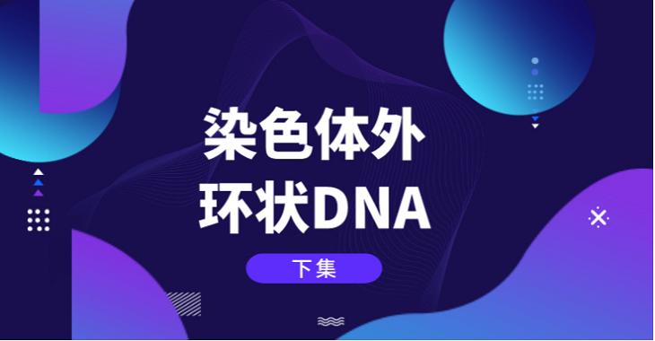 珍藏版【下集】染色體外環狀DNA的研究歷