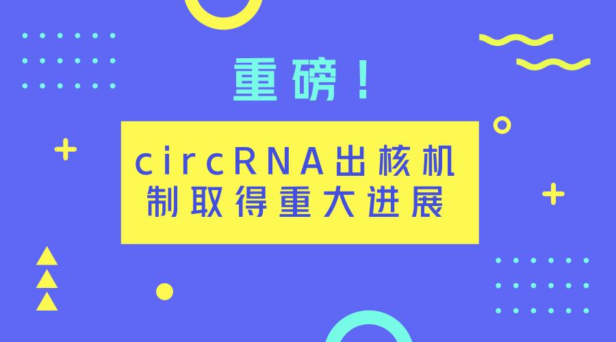 重磅!circRNA出核机制取得重大进展
