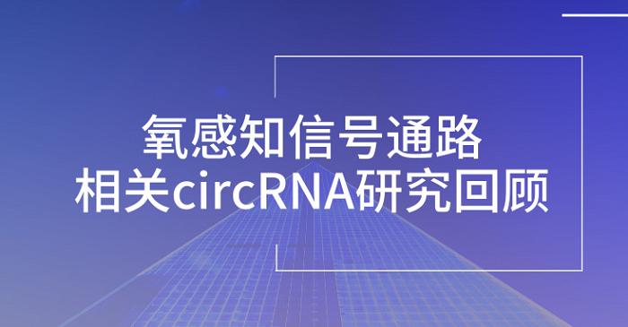 氧感知信号通路相关circRNA研究回顾